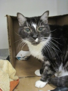Whiskers at Shelter