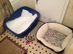Tookie's Litterbox