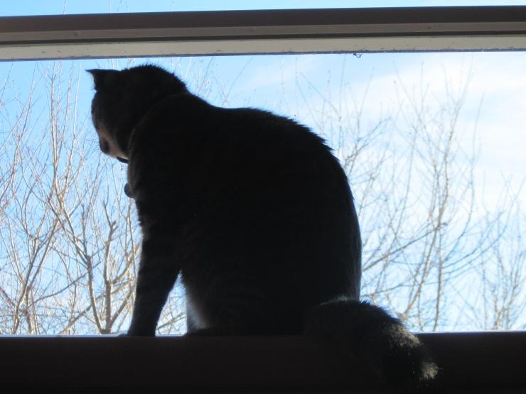 Smirnoff at Window
