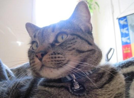 Smirnoff showing off his new collar.