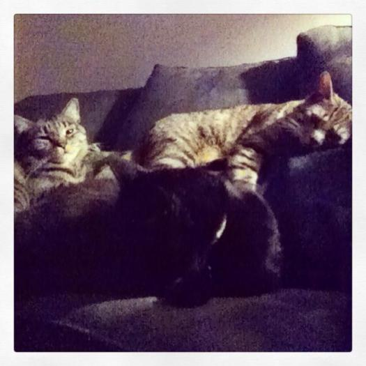 Trapped under a pile of cats. A crazy cat lady's dream.